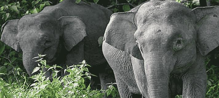 Penemuan Hewan Paling Langka Di Kalimantan