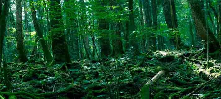 hutan-paling-seram-dan-menakutkan-01.jpg?w=840