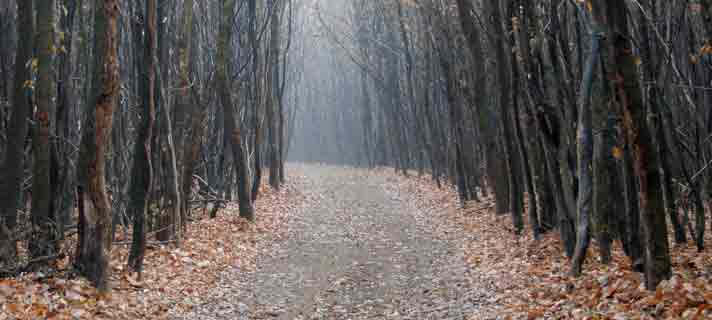 hutan-paling-seram-dan-menakutkan-02.jpg?w=840