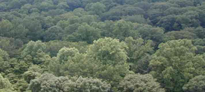 hutan-paling-seram-dan-menakutkan-06.jpg?w=840