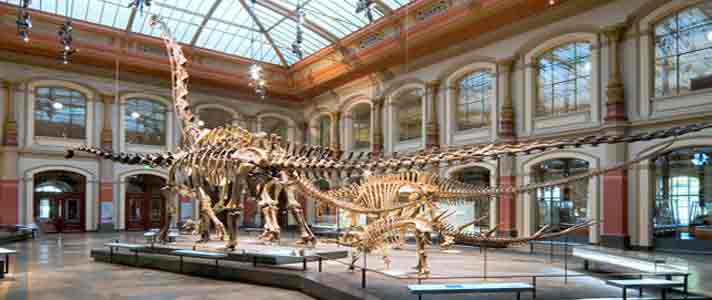 Museum-Dinosaurus-Terbaik-Di-Dunia-01