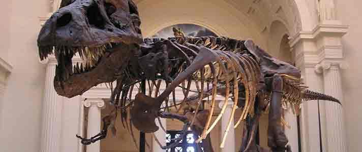 Museum-Dinosaurus-Terbaik-Di-Dunia-02