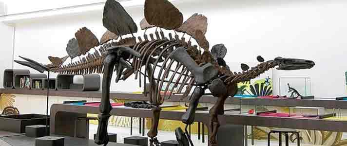 Museum-Dinosaurus-Terbaik-Di-Dunia-03