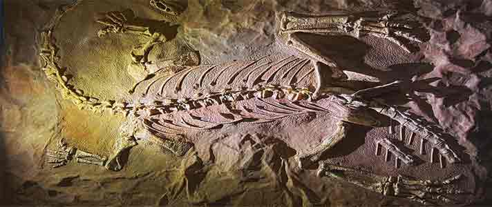 Museum-Dinosaurus-Terbaik-Di-Dunia-08