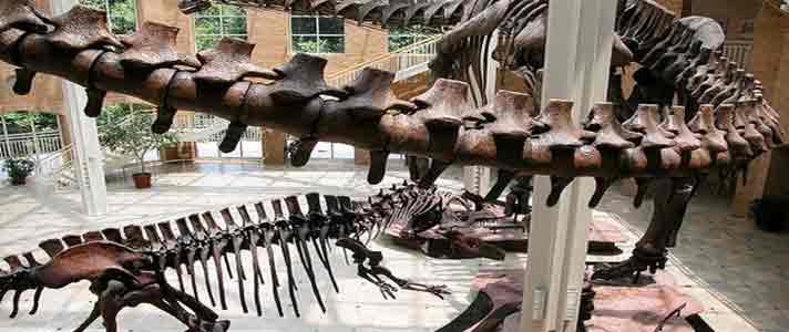 Museum-Dinosaurus-Terbaik-Di-Dunia-10