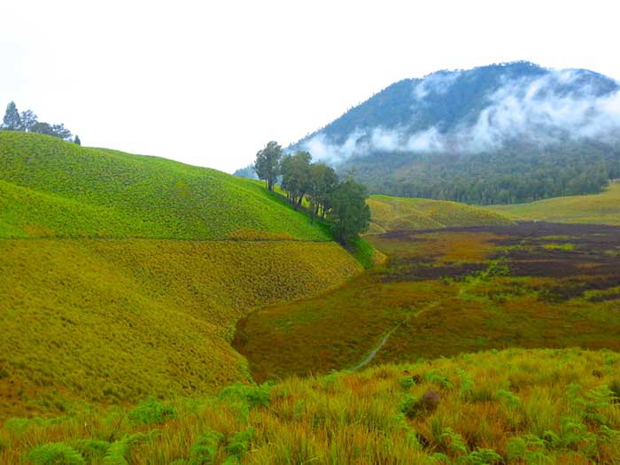 Padang-Savana-Terindah-Di-Indonesia-07