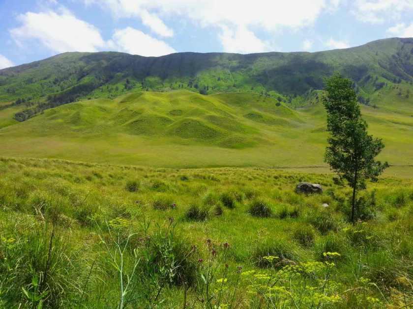 Padang-Savana-Terindah-Di-Indonesia-08