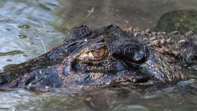 Hewan Terganas Di Hutan Amazon