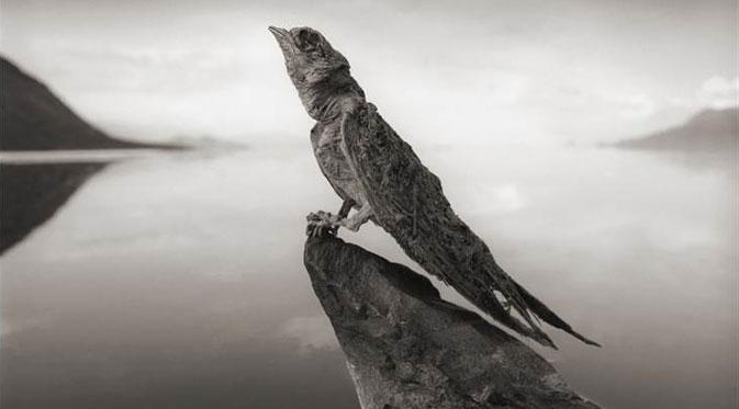 Danau Natron