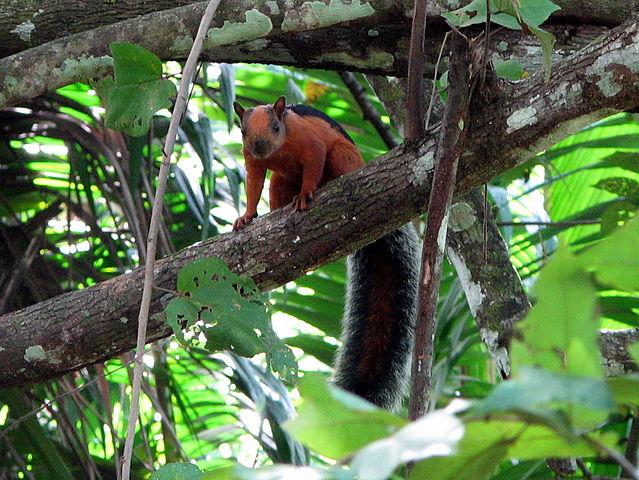 Hewan Langka Di Kalimantan