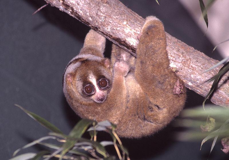 Hewan Endemik di Pulau Jawa