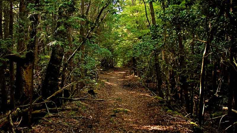 Hutan Angker