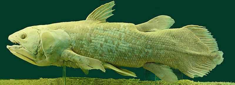 Ikan Purba Yang Masih Hidup Sampai Sekarang