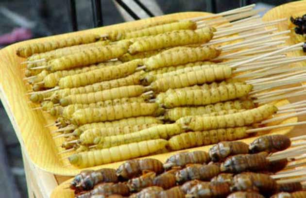 Makanan Ekstrim di Indonesia