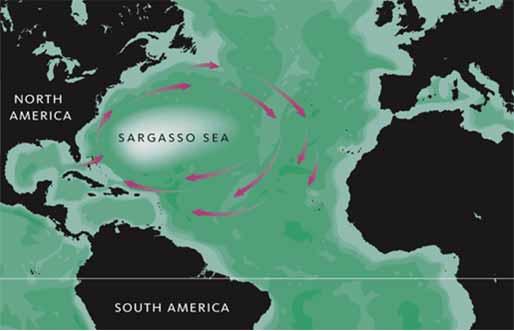 Laut Paling Mengerikan di Dunia